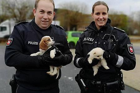 Polizeikommissarin Farina Nolde und Polizeikommissar Torsten Schrader halten während eines Polizeieinsatzes in Lahe zwei Hundewelpen. Foto: Moritz Ahrens/Polizeidirektion Hannover/dpa