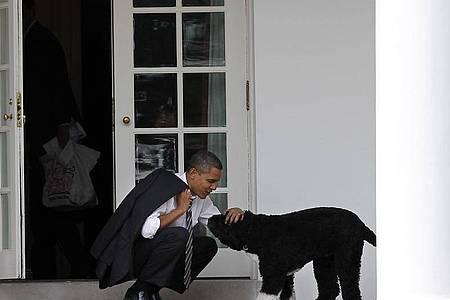 Barack Obama, damaliger Präsident der USA, 2012 mit dem Portugiesischen Wasserhund Bo. Foto: Pablo Martinez Monsivais/AP/dpa