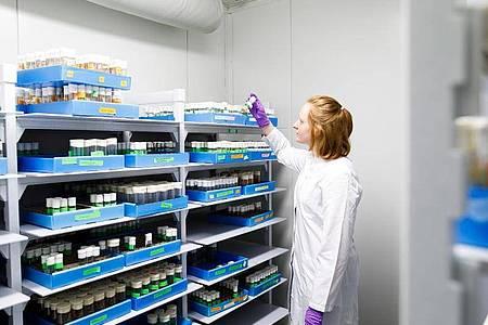 Zu den Versuchstieren am Max-Planck-Institut für Immunbiologie und Epigenetik gehören die Fruchtfliegen. Kathrin Ganter weiß, dass die Versuche wichtig für die medizinische Grundlagenforschung sind. Foto: Philipp Von Ditfurth/dpa-tmn