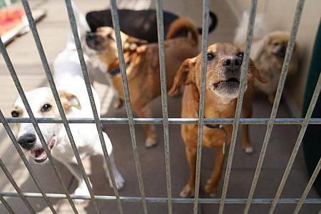 In Großbritannien werden einem Bericht zufolge derzeit viele Hunde ins Tierheim gebracht. Foto: Marcus Brandt/dpa/Symbolbild