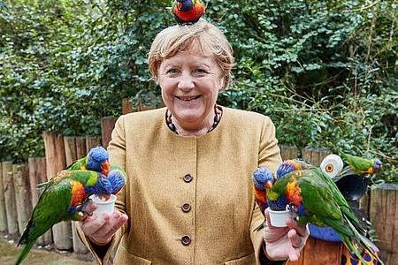 Angela Merkel (CDU), Bundeskanzlerin, füttert australische Loris im Vogelpark Marlow. Foto: Georg Wendt/dpa