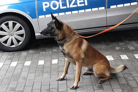 Beispielhund