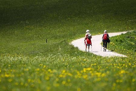 Wanderer auf einem Weg durch eine Wiese zwischen Seefeld und Mösern in Österreich. Foto: Christian Charisius/dpa