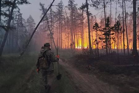 Freiwillige löschen einen Waldbrand in der Republik Sacha, auch bekannt als Jakutien, im Fernen Osten Russlands. Foto: Ivan Nikiforov/AP/dpa