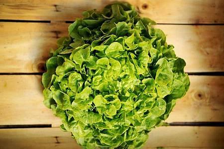 Damit sich ein Salatkopf ein paar Tage im Kühlschrank hält, sollte er in ein feuchtes Tuch gewickelt werden. Ein paar Tropfen Essig oder Zitronensaft helfen außerdem. Foto: Christian Charisius/dpa/dpa-tmn