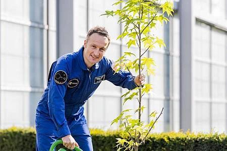 Matthias Maurer pflanzt in Köln einen Baum. Foto: Rolf Vennenbernd/dpa