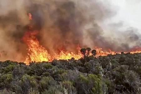 Flammen steigen aus einem Waldstück auf dem Kilimandscharo empor. Foto: Uncredited/AP/dpa