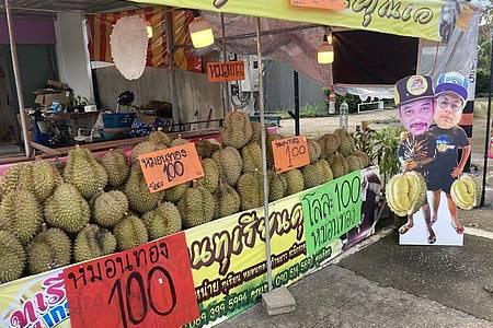 An einem Straßenstand im Süden von Phuket werden Durian Stinkfrüchte angeboten. Foto: Carola Frentzen/dpa