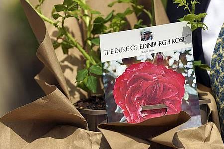Eine Rose für Prinz Philip. Foto: Steve Parsons/PA Media/dpa