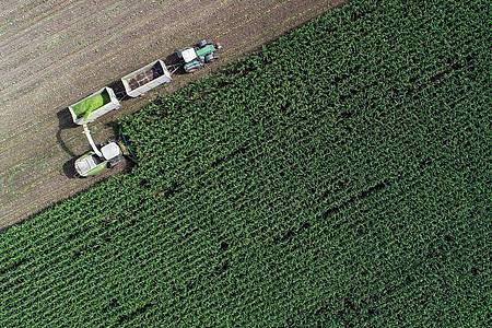 Die EU-Staaten verständigen sich auf eine Agrarreform. Foto: Patrick Pleul/dpa-Zentralbild/dpa