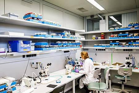 Wer wie Kathrin Ganter eine Ausbildung zur Biologielaborantin macht, lernt zum Beispiel den richtigen Umgang mit dem Mikroskop. Foto: Philipp Von Ditfurth/dpa-tmn