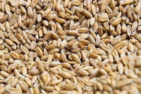 Ganze Dinkelkörner lassen sich wie Reis zubereiten. Wer Dinkelmehl zu Teig verarbeitet, sollte ihn nur kurz kneten. Sonst trocknet er aus. Foto: Catherine Waibel/dpa-tmn