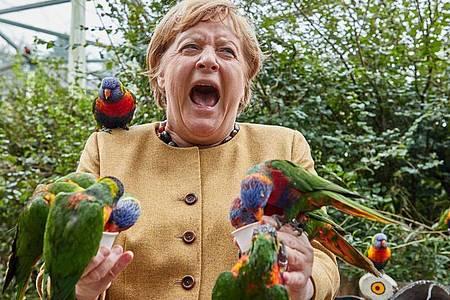 Angela Merkel (CDU), Bundeskanzlerin, füttert australische Loris im Vogelpark Marlow und wird dabei gebissen. Foto: Georg Wendt/dpa