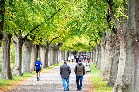 Herbstliche Farben in einer Allee in Hannover. Foto: Hauke-Christian Dittrich/dpa