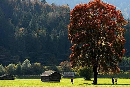 Herbstliche Farben nahe Garmisch-Partenkirchen. Foto: Angelika Warmuth/dpa