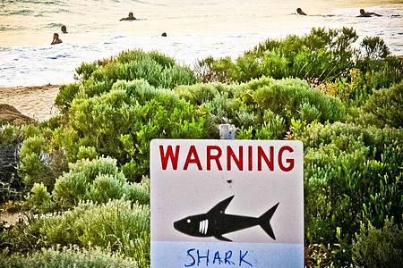 An einem Strand in Australien warnt ein Schild vor Haien. Foto: Rebecca Le May/AAP/dpa