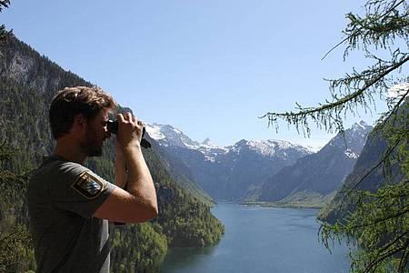 Rangerleiter Ole Behling steht an der Rabenwand im Nationalpark Berchtesgaden und blickt über den Königssee. (Zu dpa: Selfie-Touristen - Debatte um Betretungsverbot im Nationalpark). Foto: Sabine Dobel/dpa