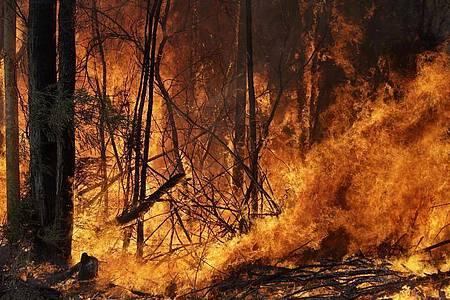 Waldbrände - wie hier in Australien - und andere Naturereignisse gefährden vor allem Menschen, die nicht sozial abgesichert sind. Foto: Rick Rycroft/AP/dpa/Archivbild