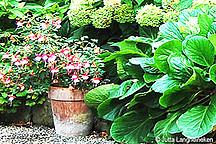 Kübelpflanze