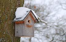 Vogelhaeuschen am Baum im Schnee