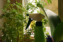 Sprühflasche im Hintergrund Zimmerpflanzen