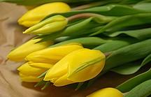 Ein Strauss gelber Tulpen auf einem Tisch
