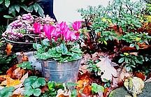 Gräber bepflanzen