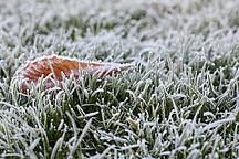 Eingefrorenes Blatt auf gefrorenem Rasen
