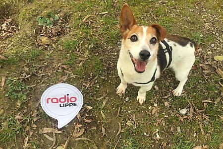 Hund Rudy