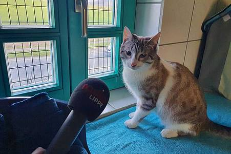 Katze Leo miaut ins Radio Lippe Mikrofon