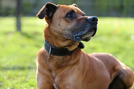 Foto von dem Hund Monty