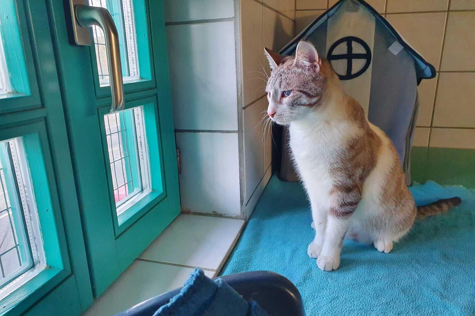 Katze Leo