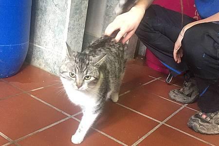 Graue Katze Lisa wird gestreichelt