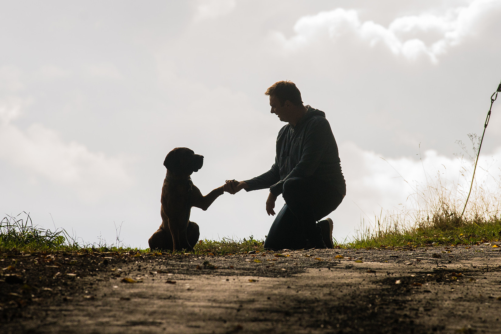 Hundetalk