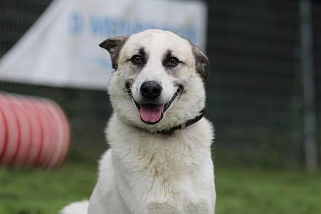 Maras Tiertreff: Weiß-brauner Hunderüde Johannes
