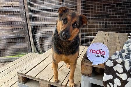 Hund Laika - Maras Tier-Treff