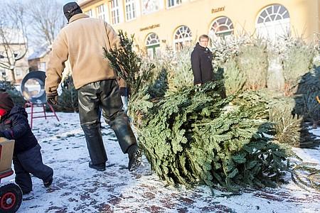 Mann zieht einen Weihnachtsbaum hinter sich her