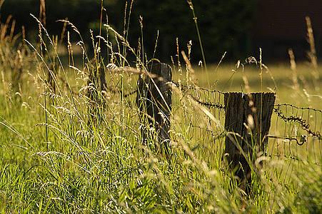 Weide und Zaun